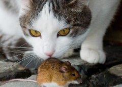 Gouvernement des chats au pays des souris, pourquoi continuons nous à élire des chats ?