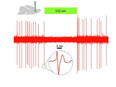 Cooper_laboratory_recording_of_optogenetic_silencing_of_prefrontal_cortical_neuron