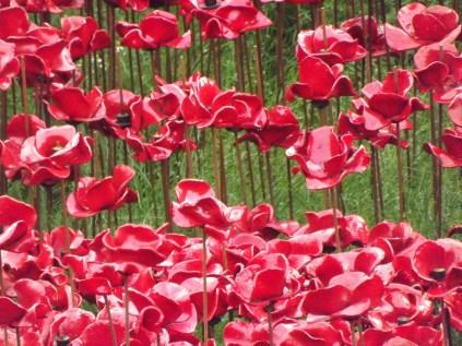 Poppies (11)