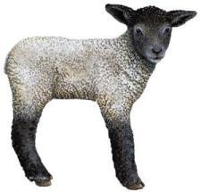 Lamb_med