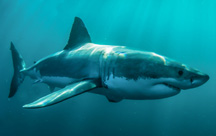 Sharks, Sloths and Humpback Whales: Lessons in Biomimicry