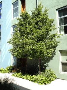 Glashaus-tree