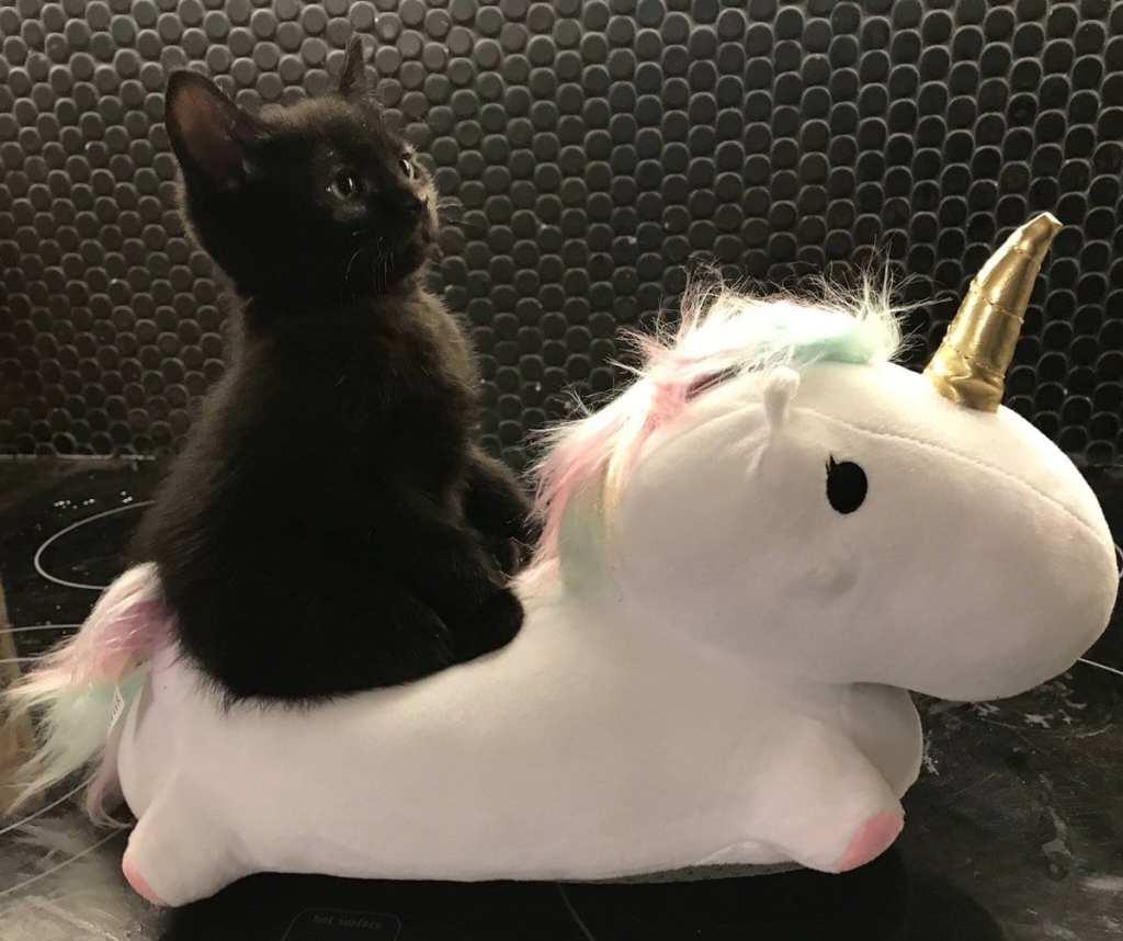 cette photo présente un chaton sur une peluche licorne