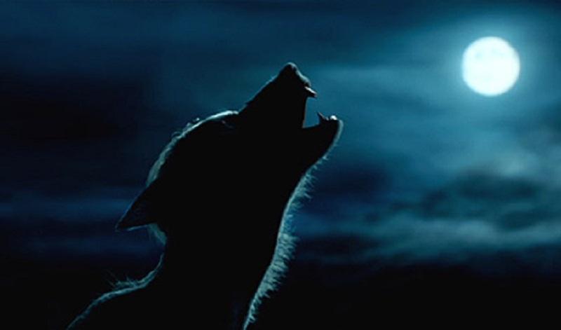 Photo officielle de la Warner Bros mettant en scène le Loup-Garou Remus Lupin hurlant à la pleine lune.