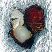 Another Fabulous Fruit: Lichi
