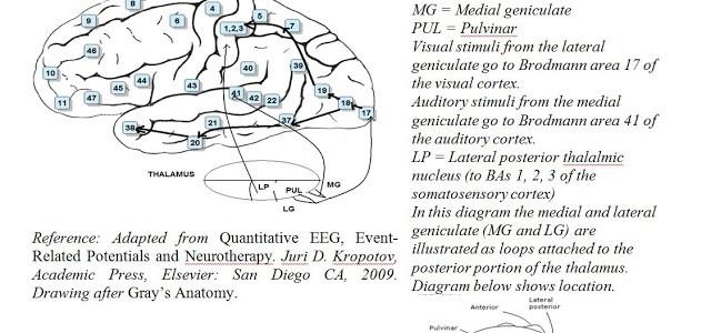 Neurofeedback als Tool für Neuroplastizität