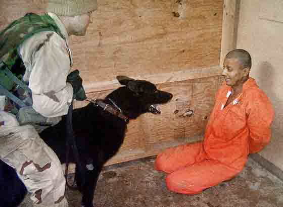 Dog at Abu Ghraib jail