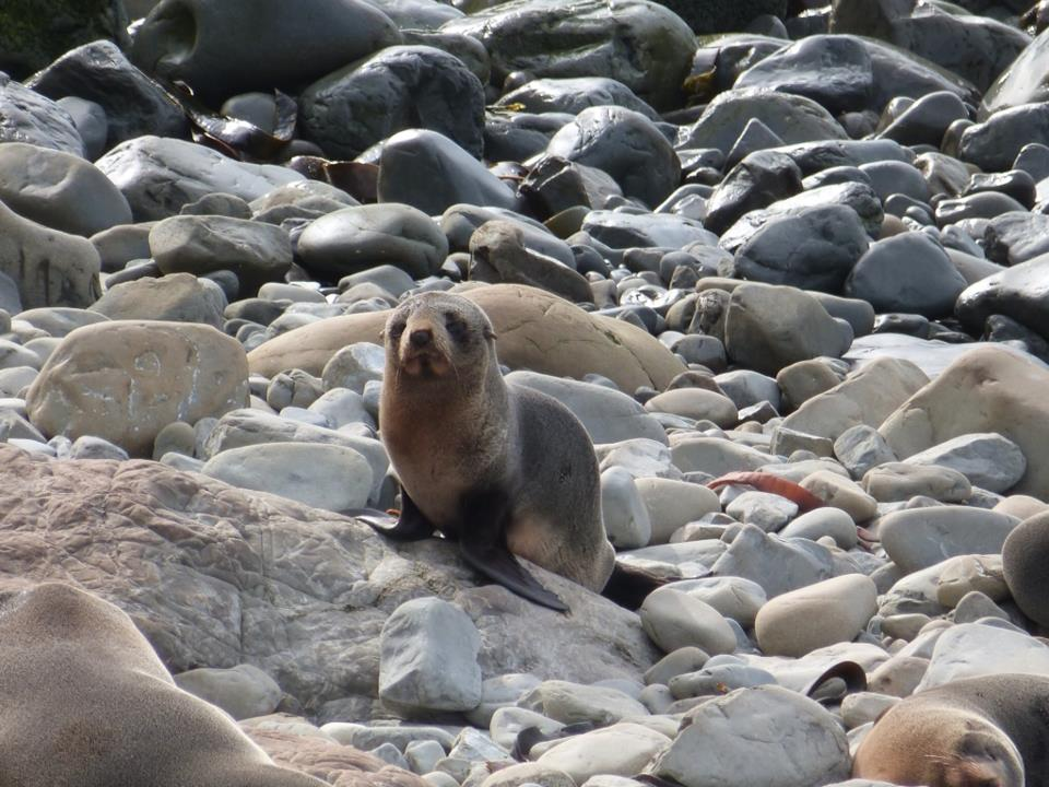 seals in kaikoura, best country