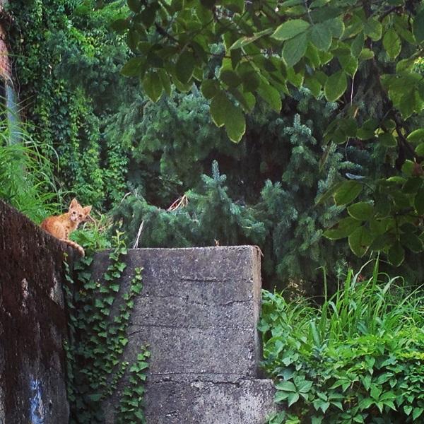 A Kitten roams Tkalciceva Backstreets
