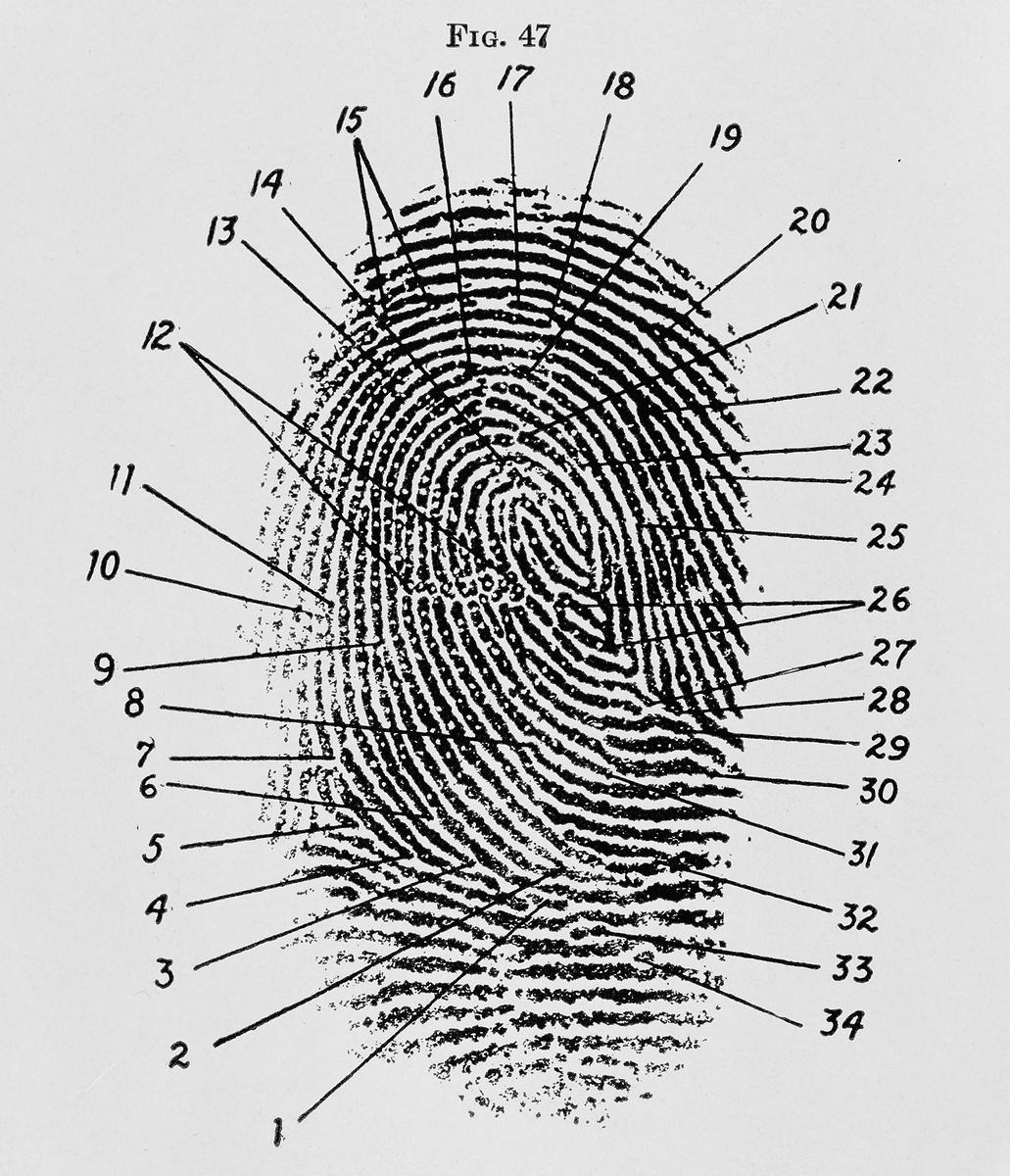 Fingerprints Don T Lie