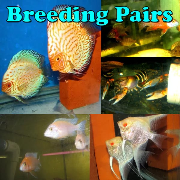 Aquarium Fish For Sale – Tropical Fish, Freshwater Fish and Exotic Fish