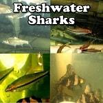 Aquarium Sharks online