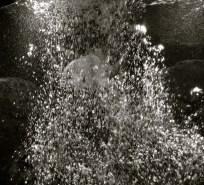 Bubbles in the aquarium