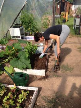 seminando spinaci
