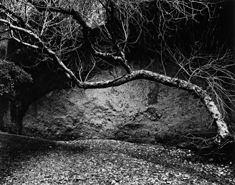 Tree and Wall West Pinnacles 1985 by Edna Bullock