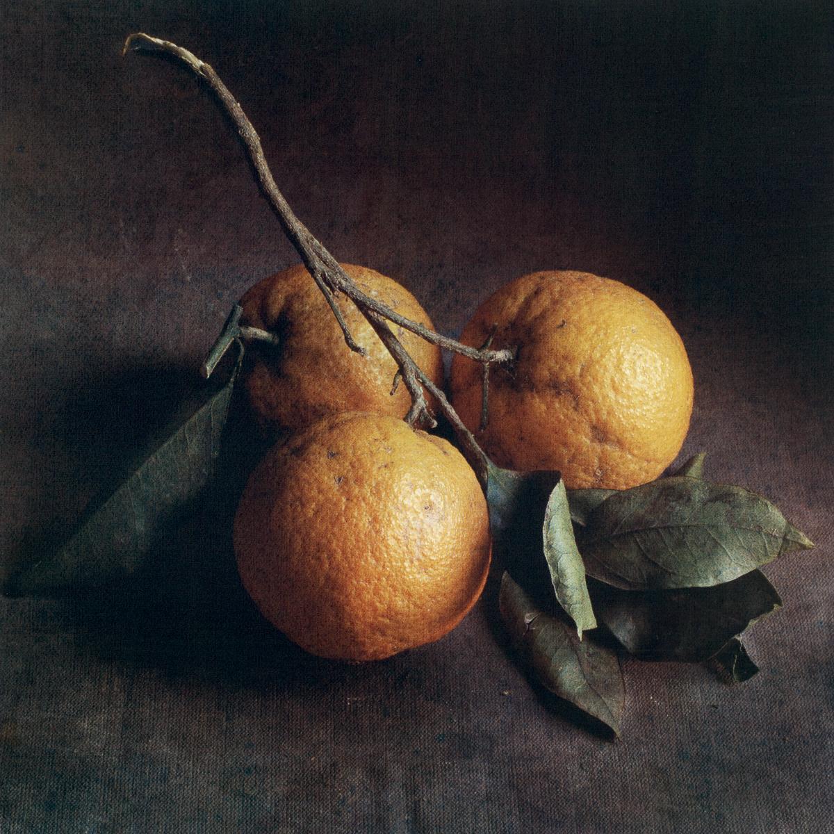 Autumn Oranges © Cy DeCosse,3-Color gum dichromate print
