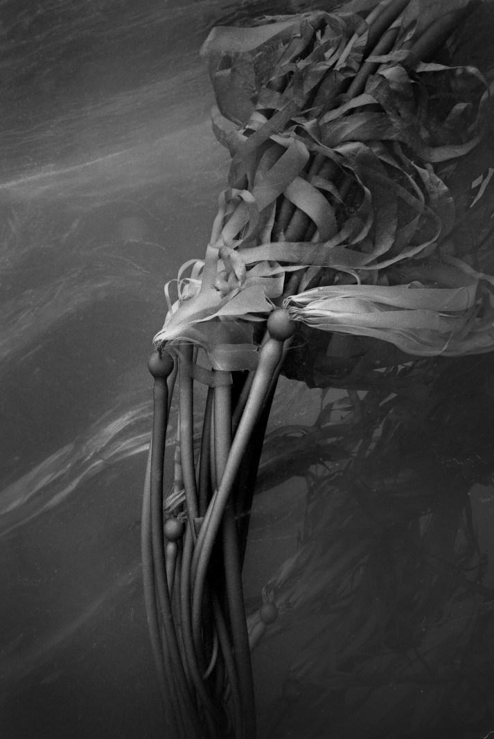 Bull Kelp Forest Dance #10, Big Sur, CA © Chuck Davis
