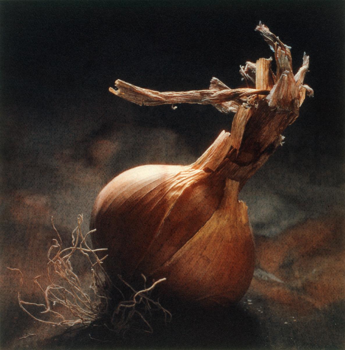 Summer Onion by Cy DeCosse