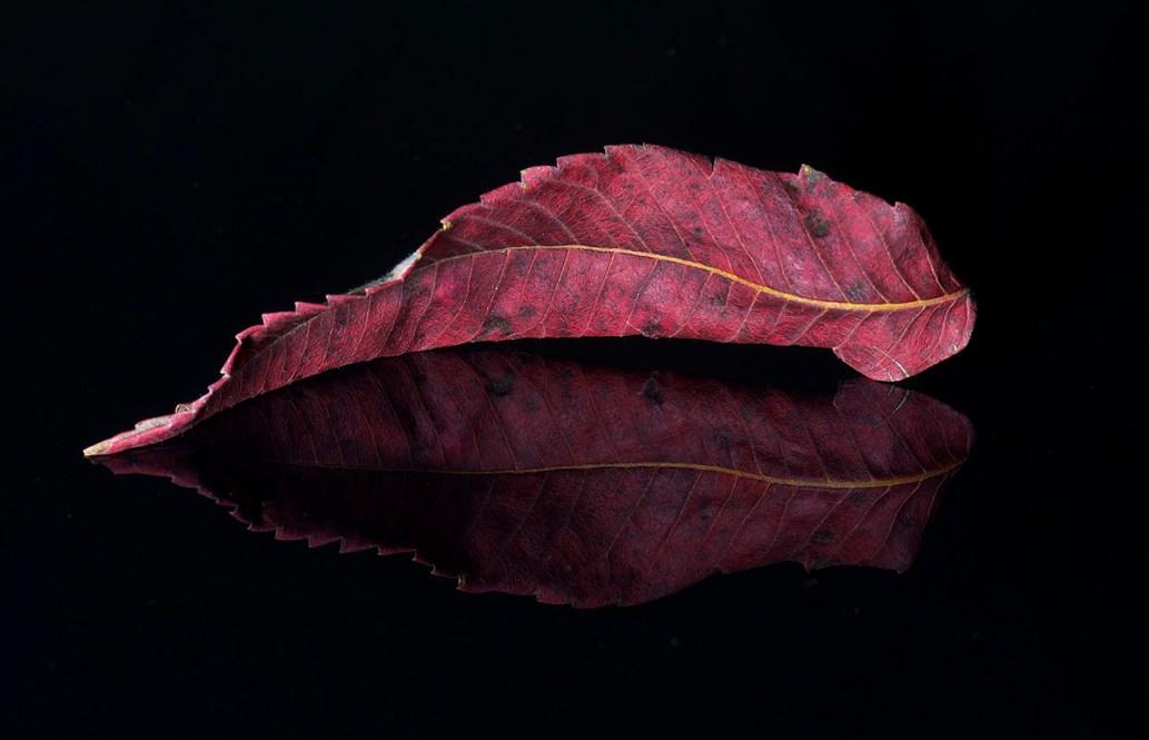 Leaf 3 © Terri Cappucci