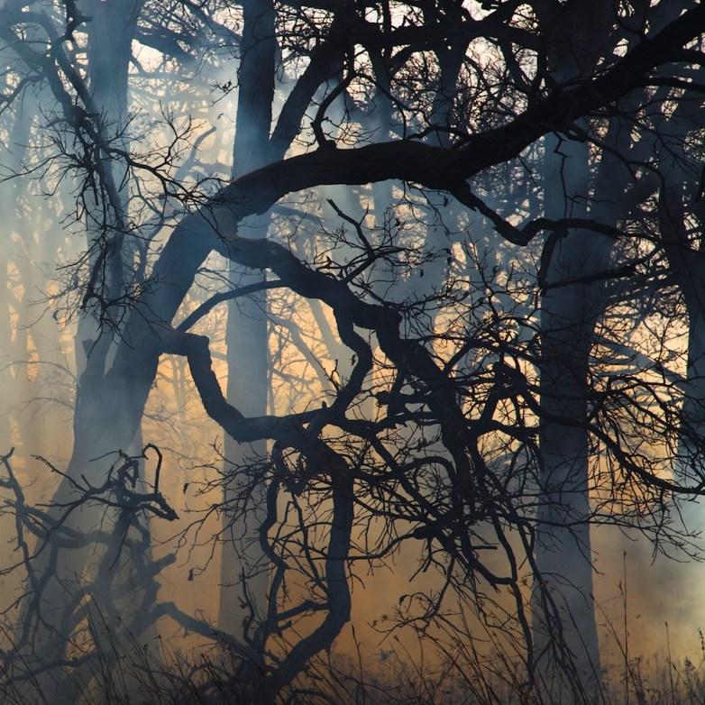 Burn 53 © Jane Fulton Alt