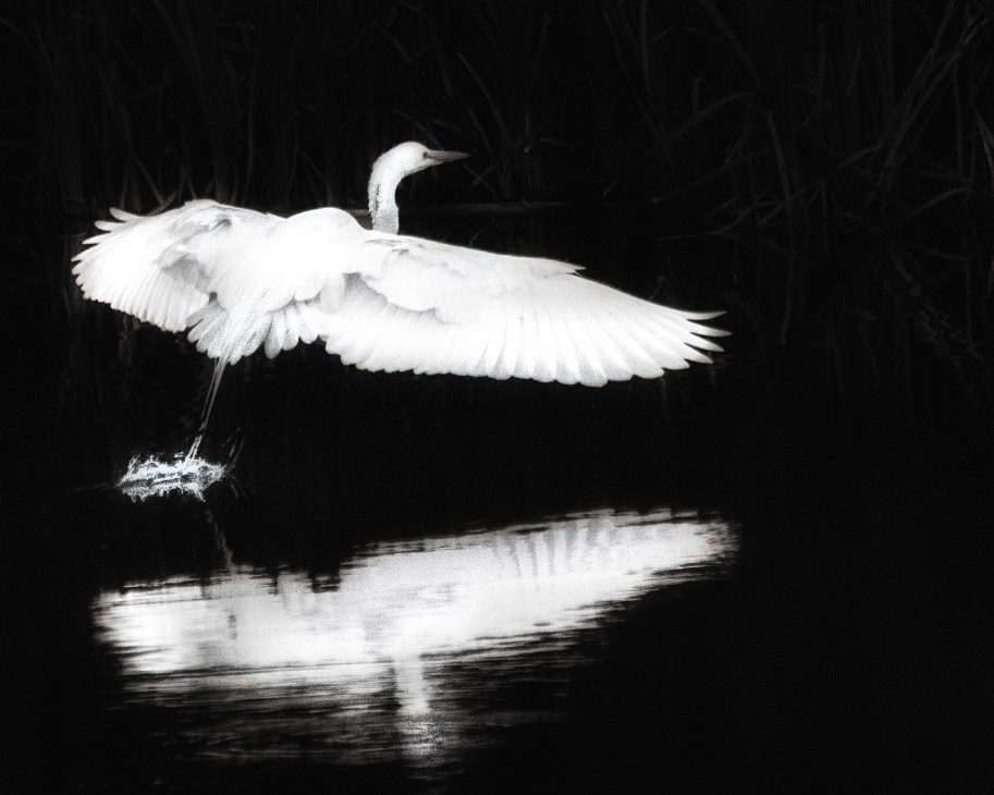 Heron © Bob Sadler