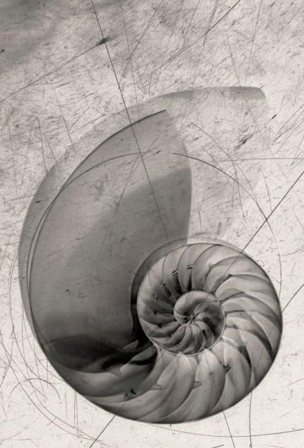 Rolling Nautilus 2 © Julie Meridian