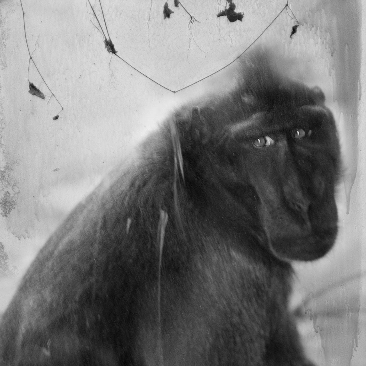 Macaque © Anne Berry
