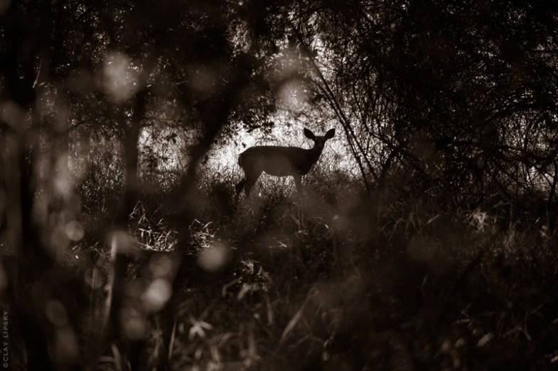 Prey © Clay Lipsky