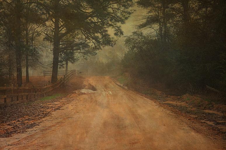 After the Rain © Vicki Hunt