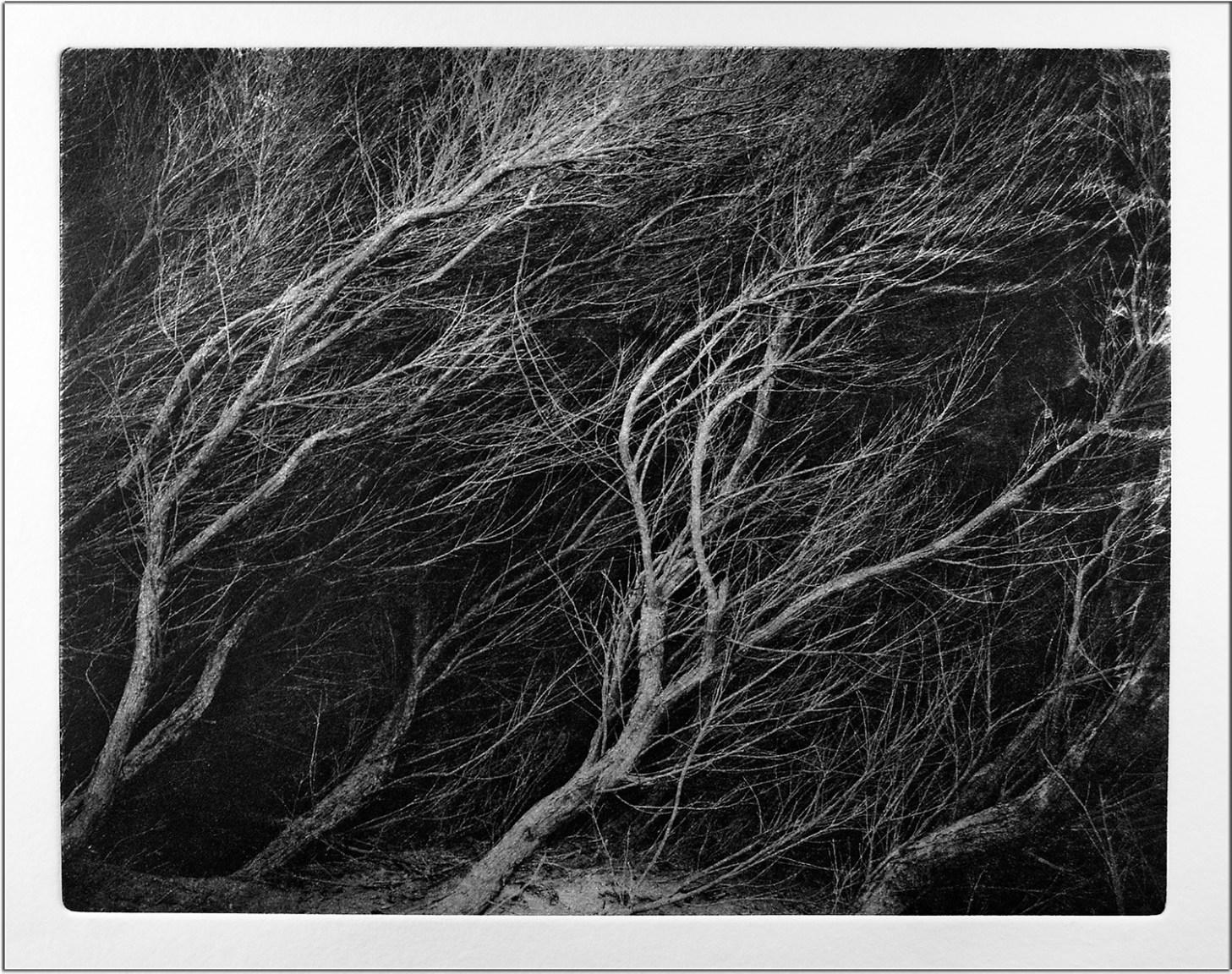 Westwind © Peter Miller