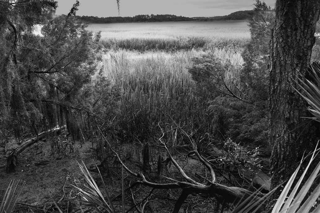 Branch © J,Rosenthal