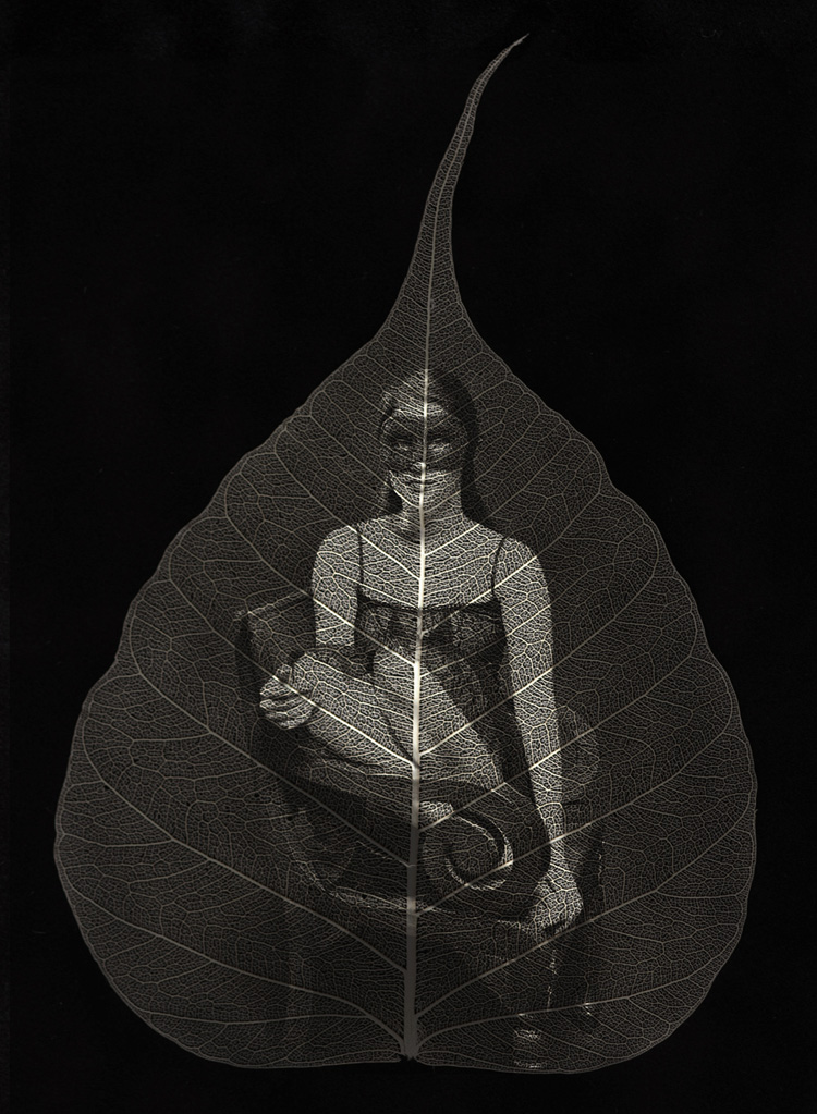 Observing © Ted Preuss