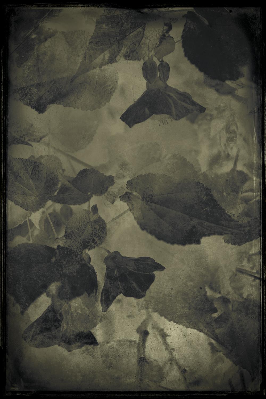 Contemplation © Eduardo Fujii_