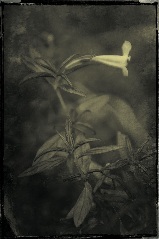 Contemplation 7 © Eduardo Fujii