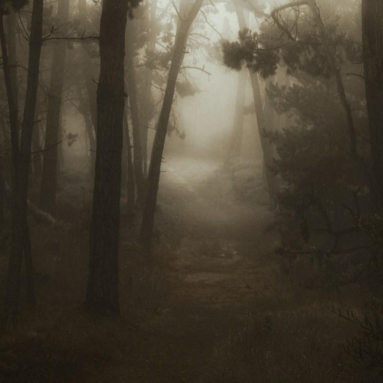 Into the Woods 1 © Eduardo Fujii