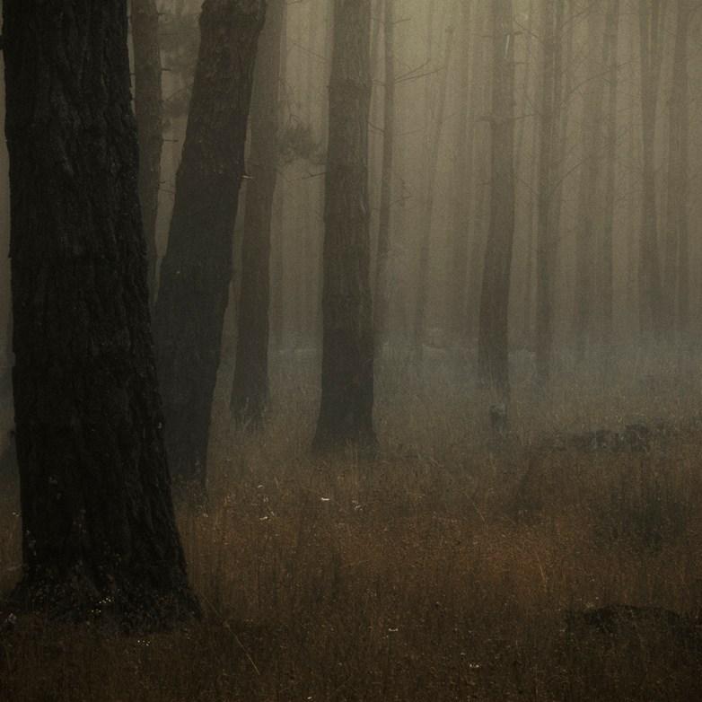 Into the Woods 2© Eduardo Fujii