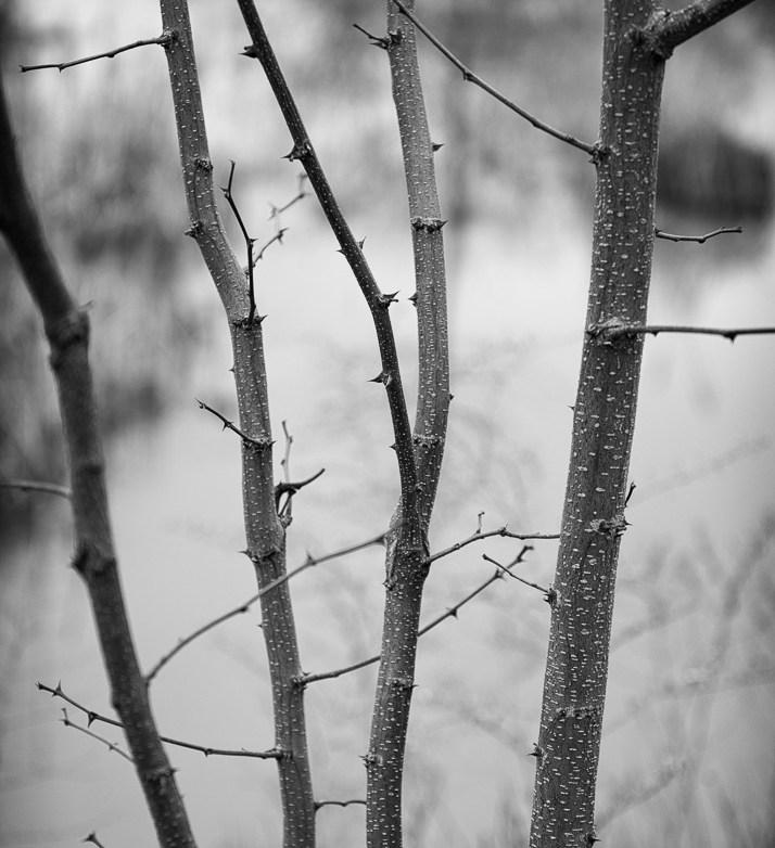 The Pond Project-2© E.E. McCollum