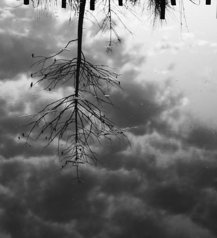 The Pond Project 40 © E.E. McCollum