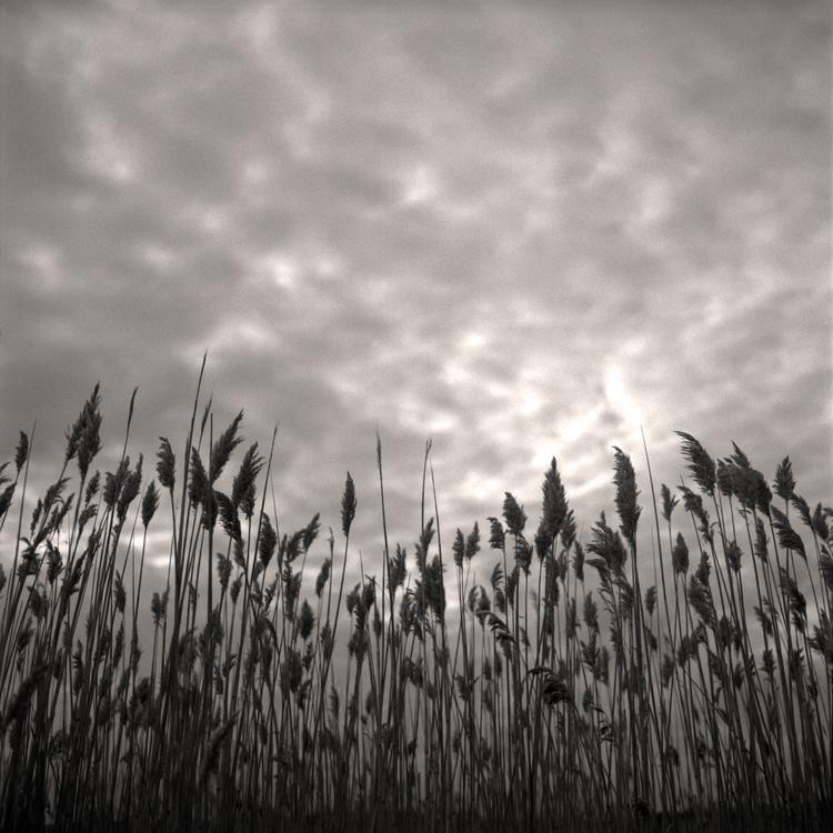 Reeds © Birgit Maddox