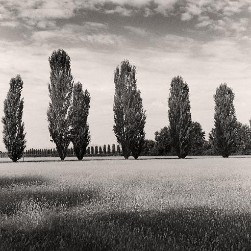 Rows © Birgit Maddox