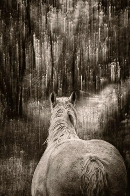 Among The Trees#4 © Mary Aiu