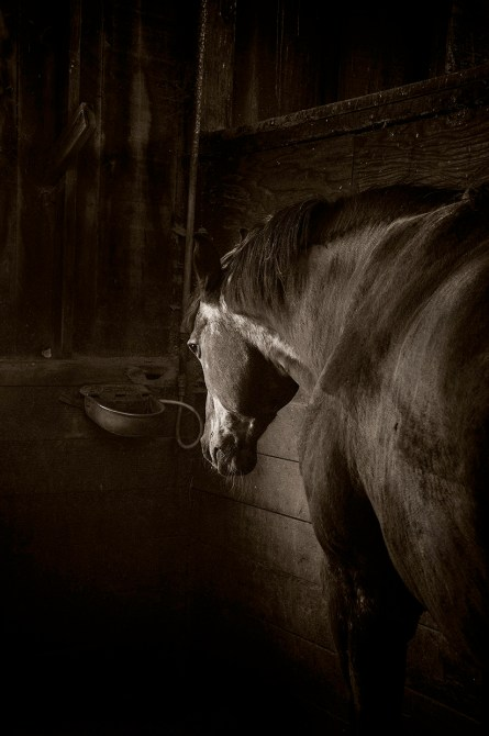 Barn Light #4 © Mary Aiu