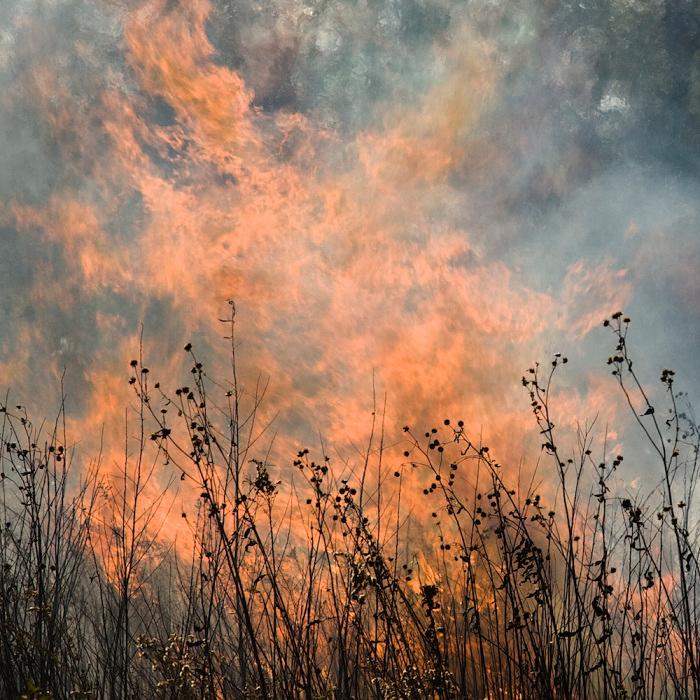 © Jane Fulton Alt