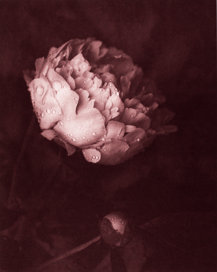 Morning Dew © Mark Nelson,Gravure