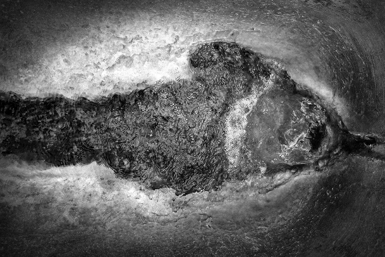Dolphin © Aryan Chappell