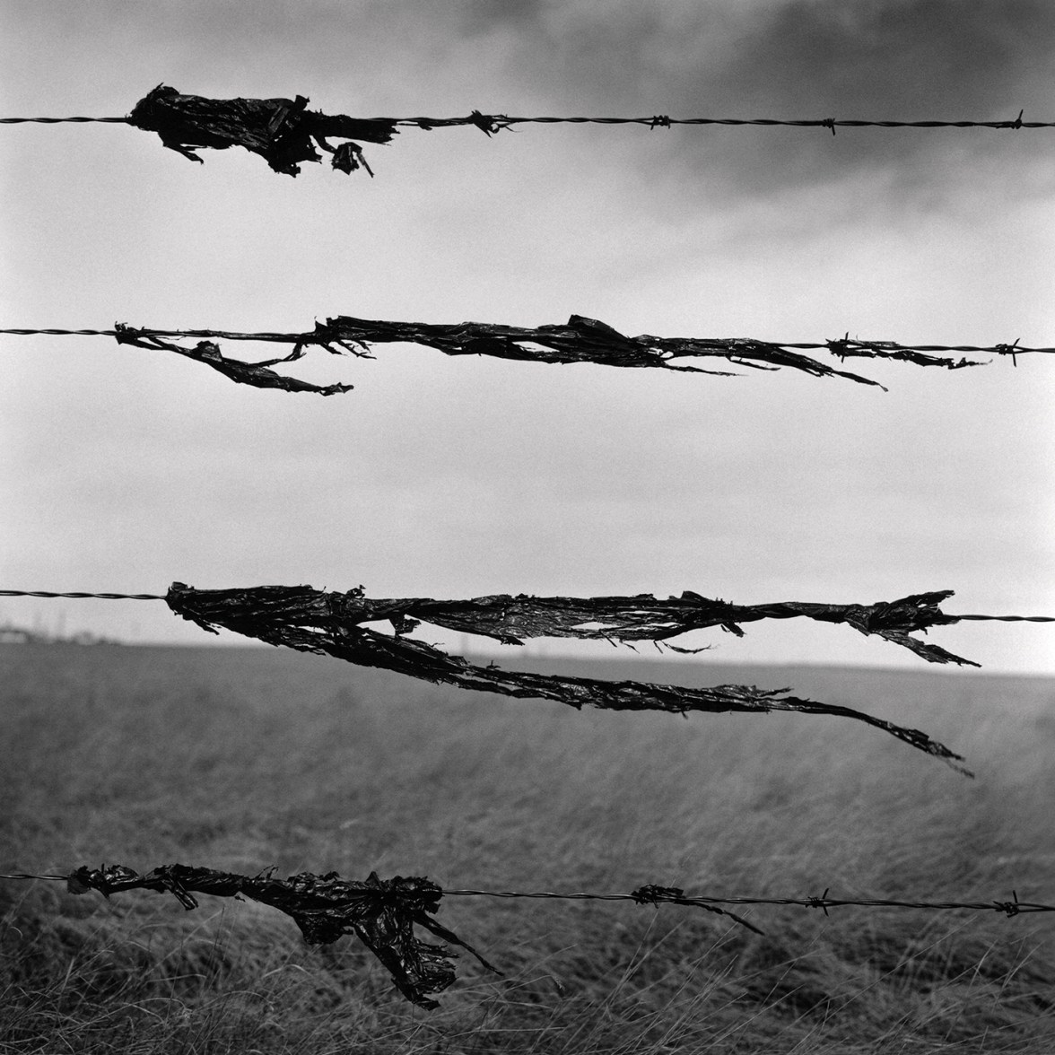 Snag 6 © Wes Bell