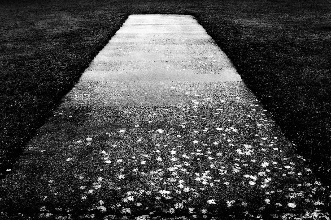 © Robynne Limoges