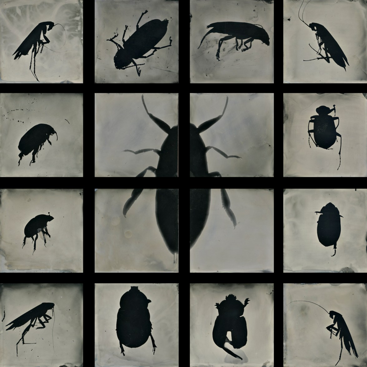 Insectare Bugged ©S. Gayle Stevens