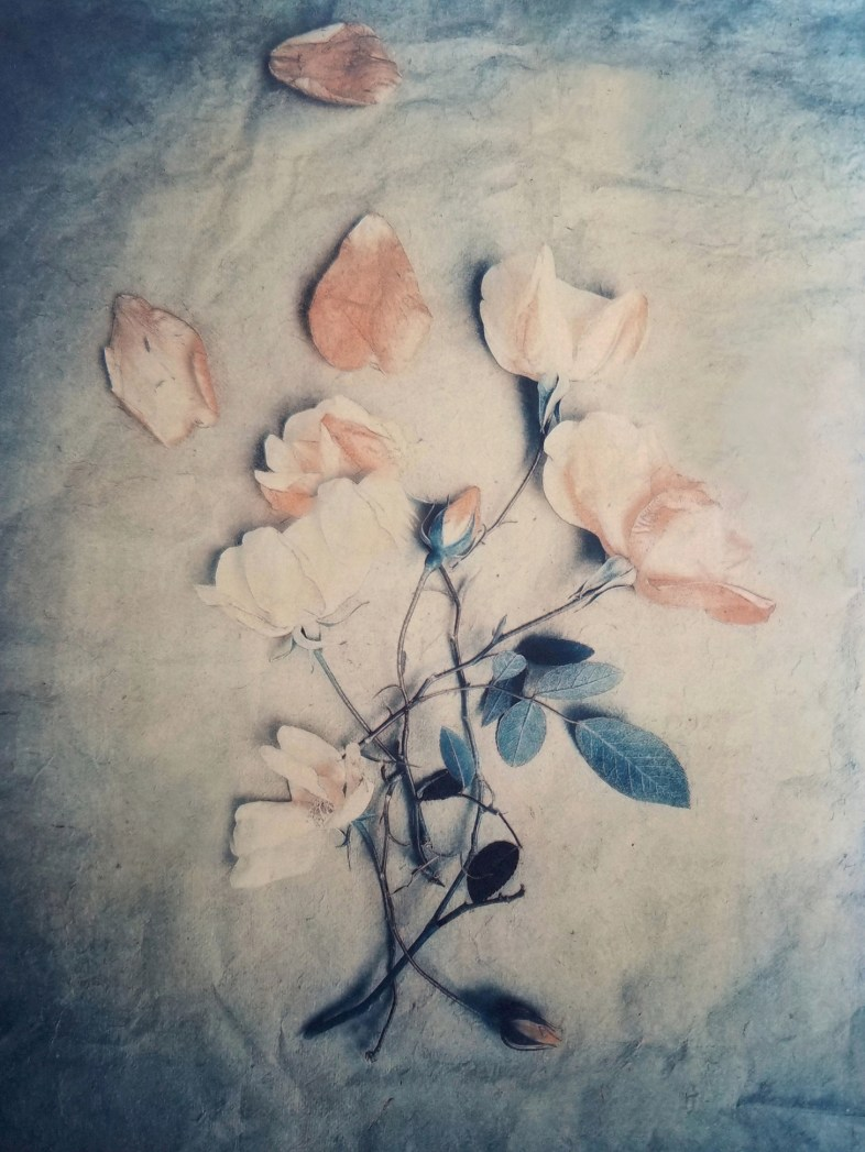 Wild Roses © Diana Bloomfield
