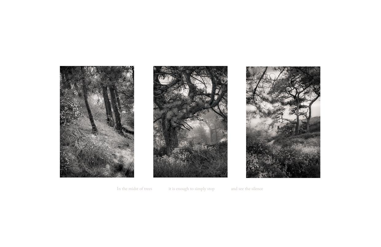 Seeing Silence 1 © Jodie Hulden